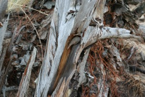 A beach worn entanglement (c)Gracie K Harold 2014